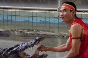 Individual transfer to crocodile farm