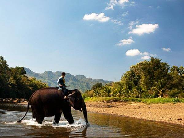 Elephant ride. Individual transfer from Bangkok and Pattaya