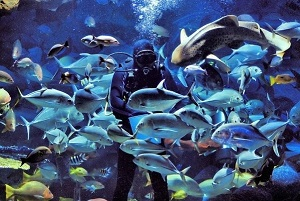 Underwater World. Individual transfer from Bangkok and Pattaya