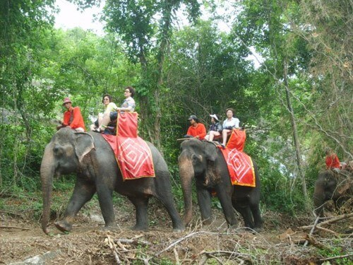 Elephant ride in Thailand. Transfer