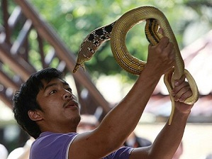 Snake Farm. Transfer from Pattaya